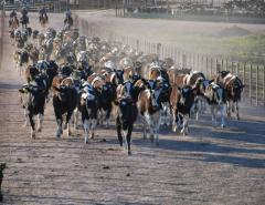 Zafra de primavera: con oferta destacada y necesidad de ganados