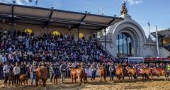 Expo Palermo: con destacada genética uruguaya