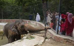 La historia de Kaavan, un elefante deprimido