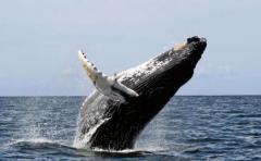 García: ballena muerta tenía claros síntomas de enfermedad