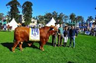 """Brangus: dado la adaptabilidad y eficiencia """"la venta de toros creció 90%"""""""