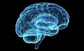 Así es cómo el cerebro ordena los recuerdos cronológicamente