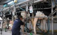 Gremiales lecheras insisten con aumento del precio de la leche cuota