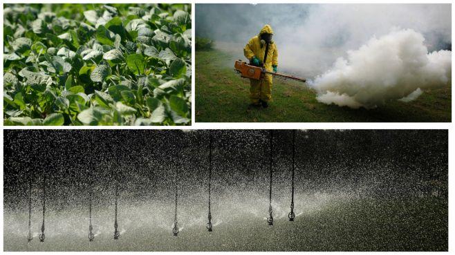GlifosaNto: nuevos datos de la OMS sobre el herbicida y la salud
