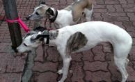 Sancionarán a quienes no respeten ley de protección animal