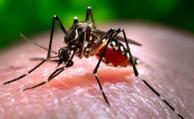 Aedes Aegypti amenazará la zona costera del Uruguay