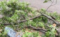20 intervenciones de Bomberos, puertos cerrados y árboles caídos