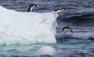 Crean la mayor área protegida marina del mundo