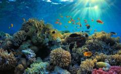 Mayor arrecife de coral de Japón en riesgo por cambio climático
