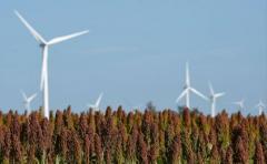Pequeños ahorradores podrán ser socios de parque eólico de UTE