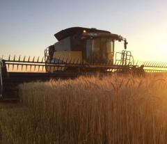 Cultivos de invierno: rindes en la región superan expectativas