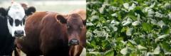 Balance y perspectivas del sector agropecuario