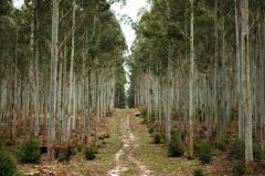 Sector forestal obtiene ingresos por 1.515 millones de dólares