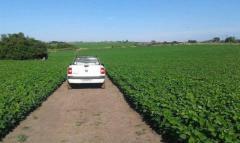 Cultivos: la soja con buenas perspectivas
