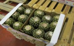 Aplican sustancia derivada del ananá a pacientes quemados