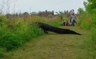 El cocodrilo gigante que se pasea por la Florida
