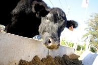 Estancias del Lago apuesta una vez más a la producción lechera con ganado estabulado, con un tercer tambo rotativo