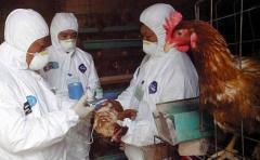 Alerta máxima ante la propagación de la gripe aviar en el mundo