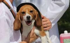 Perros ayudan en detección prematura de cáncer