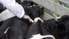 Biogénesis Bagó fue distinguida como mejor empresa veterinaria de Latinoamérica