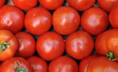 ¿Por qué los tomates ya no saben a nada?
