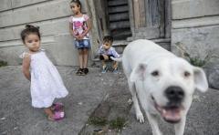 Vacuna contra leishmania canina, primer paso para la humana