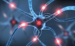 La plasticidad del cerebro para adaptarse a los cambios
