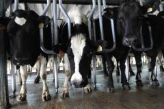 """Gremiales lecheras reclaman """"capitalización, diferir vencimientos de créditos y aumento del precio de la leche al productor"""""""