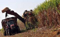 Mercosur: productores argentinos rechazan libre comercio de azúcar