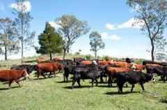 Plaza Rural: con mercado ágil colocó el 94% de la oferta