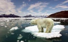 Calentamiento global amenaza vida marina en polos y trópico