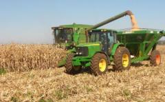 Zafra récord: el maíz tiene rindes entre 10 y 12 mil kilos por há