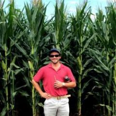 Cultivos: mientras el maíz tiene rindes record, la soja tiene muy buen potencial