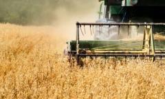 Soja: Paraguay prevé cosecha récord