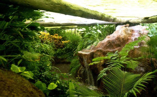 Selva. Parque Biomas