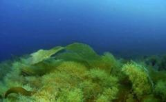 El submarino capaz de descender a lo más profundo del océano