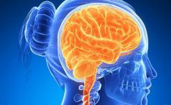 ¿Qué características tiene el cerebro de la mujer?