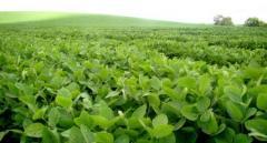 Brasil lleva el 62% de su área sojera cosechada
