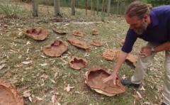 Hallan 21 tipos de huellas de dinosaurio en Australia