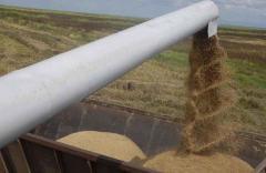 """H. Perrone: """"Para que se levante el paro general, la ITPC  solicita que """"se ajusten los precios de la cosecha del arroz"""""""