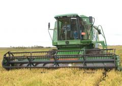 Arroz: la cosecha alcanza el 50% del área, con rindes de entre 8.500 y 9.000 kg/hás