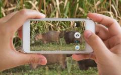 Mvotma intensificó operativos contra caza ilegal de animales
