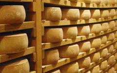 Objetivo: fortalecer producción quesera en Uruguay