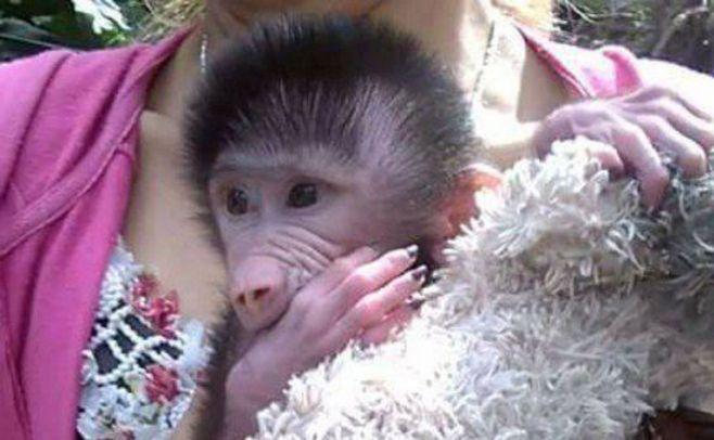 La triste historia del mono Miguelito en zoo de Salto