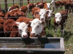 Plaza Rural colocó el 97% de la oferta, con un precio para los terneros de 2,13 de promedio