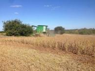 La soja corrigió a la baja 60 dól/ton, con 320 dól/ton en Nueva Palmira