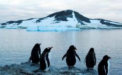 Glaciares en península Antártica pierden entre 20 y 30 centímetros al día