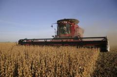 Soja: levantado el 70% de la producción, se consolida zafra récord