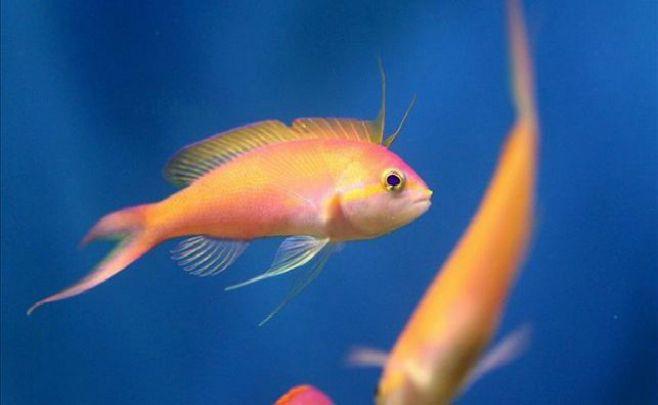Herencia del armamento nazi: peces con tumores