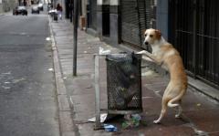 Autoridades preocupadas por superpoblación de perros